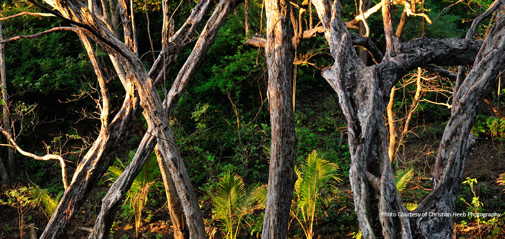 Discover the nature of Nicaragua on a tour with ORO Travel.