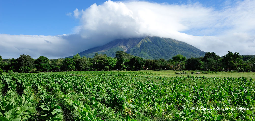 Discover Nicaragua with a tour of tobacco fields on Ometepe Island.